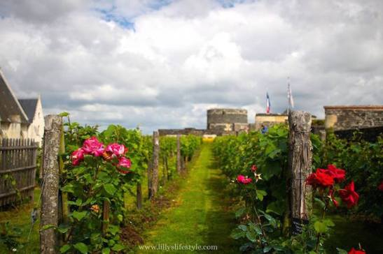 vigna nei giardini interni castello angers francia