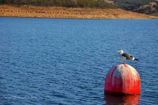 barca lago alqueva portogallo