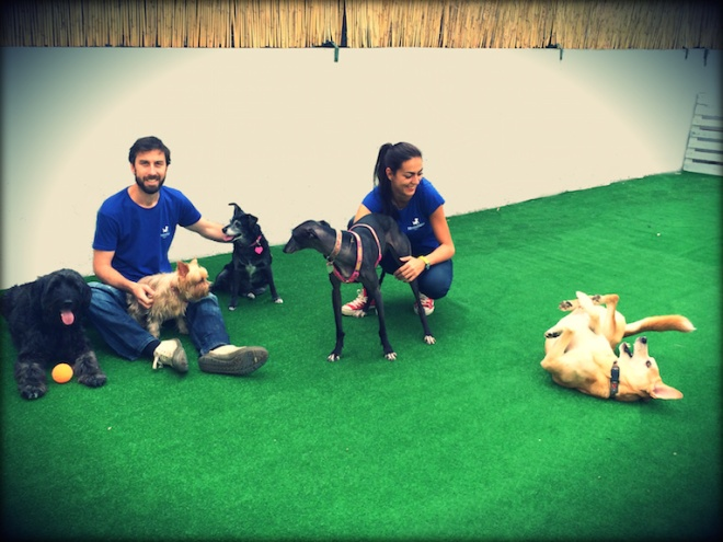 asilo cani lisbona