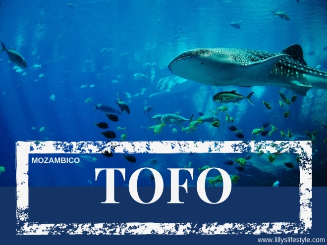immersione tofo mozambico