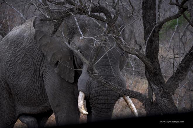 quali animali si possono trovare safari parco kruger