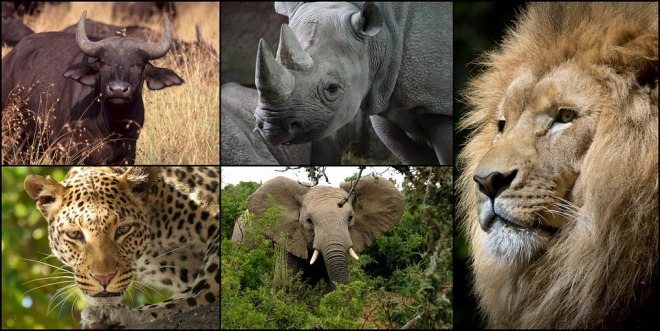 animali parco kruger sudafrica