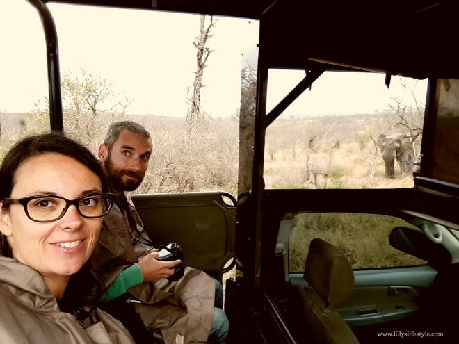 elefante parco kruger sudafrica